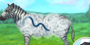Hra - Feed Zebra