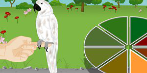 Hra - Bird Needs Owner