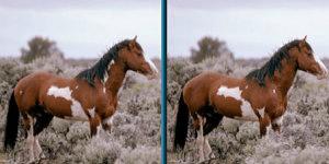 Hra - Spot Horse 2v1