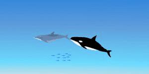 Hra - Dolphin Tag