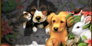 Hra - Lovable Pets